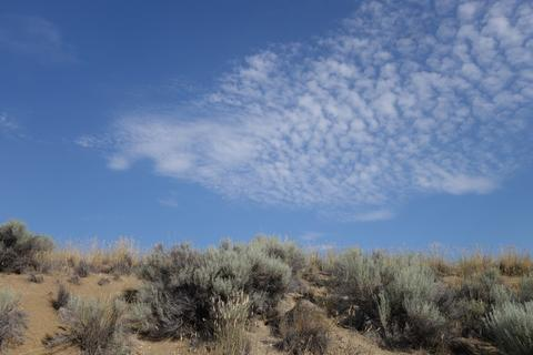 Pretty clouds over the sagebrush.