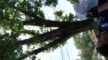 Nap under a tree.